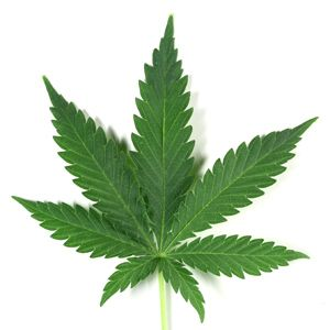 10 Marijuana Myths Advocates Want You to Believe
