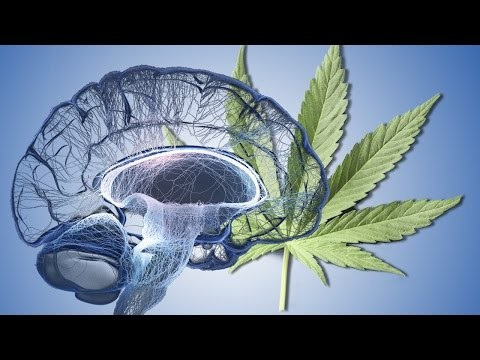 Cannabis and THC: How it damages the brain and body
