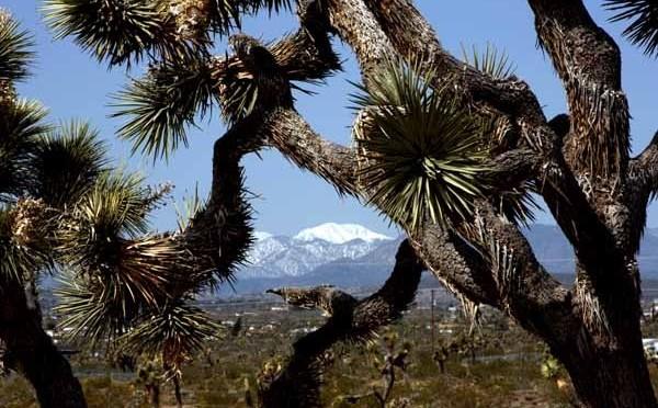 California: Big Losses for Pot Legalization Movement