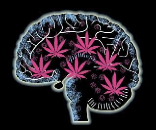 Is Marijuana a Safe Drug?
