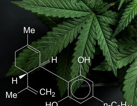 What You Need to Know About Cannabis-derived Compounds and CBD